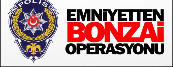 Bonzai takibinde 2 gözaltı