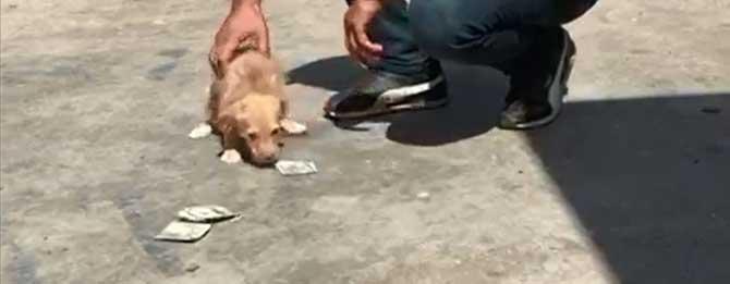 Dolarını artık köpekler yemiyor!