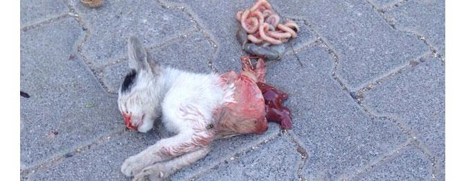 Yine Satanistler, Yine Kedi Kesti İddiası
